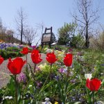 ガーデンミュージアム比叡は山の上にある植物園