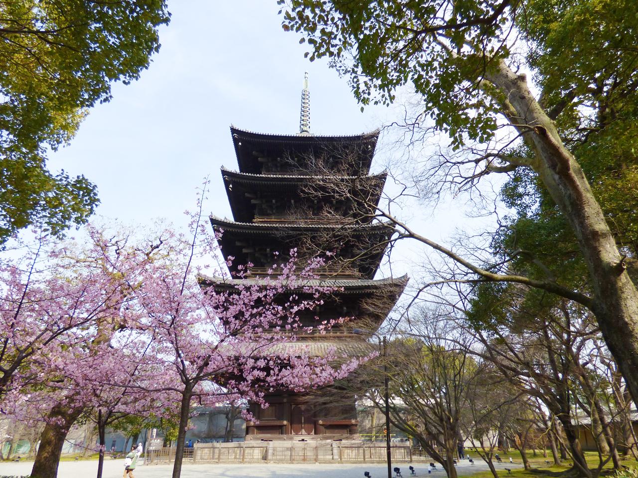 東寺の五重の塔と梅