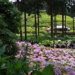 6月・7月の京都観光で知っておきたい紫陽花の名所一覧