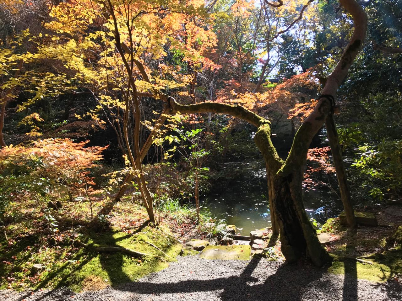 赤山禅院の紅葉(池)