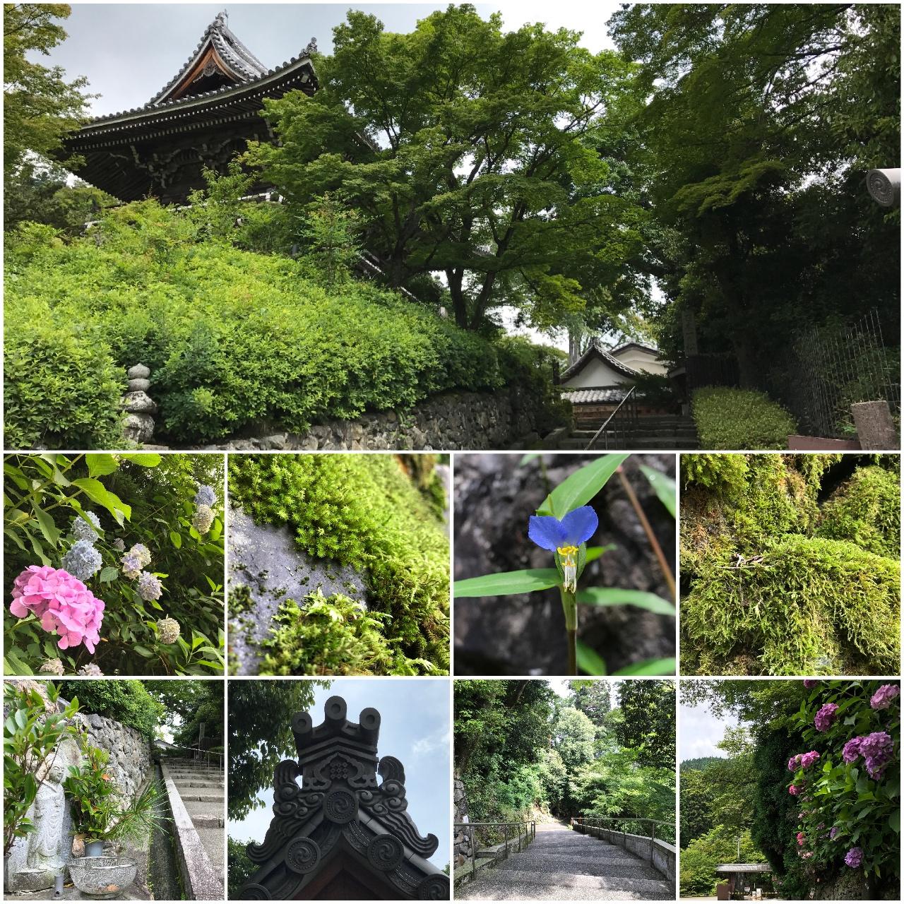 善峯寺の駐車場付近の風景