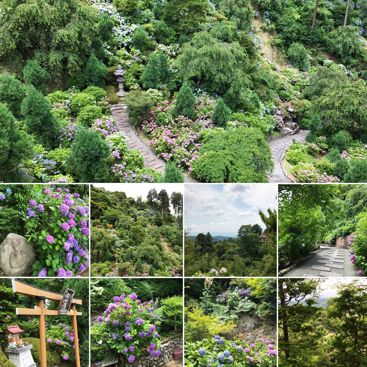 善峯寺の境内-下層の風景(あじさい)