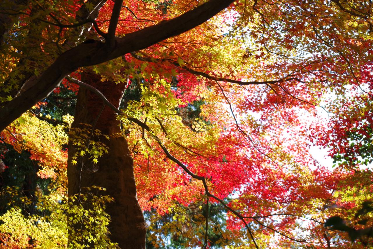 南禅寺境内の紅葉