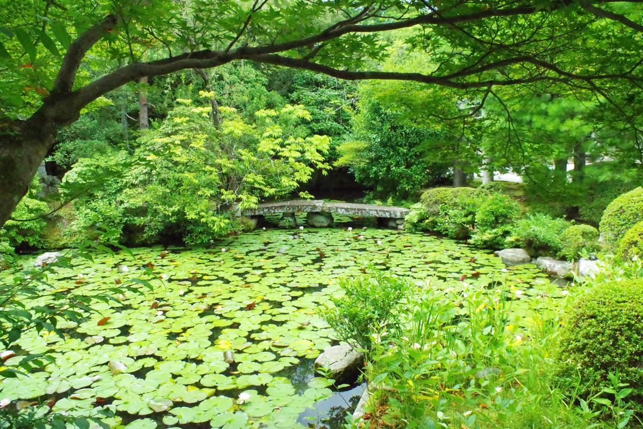 金地院-池