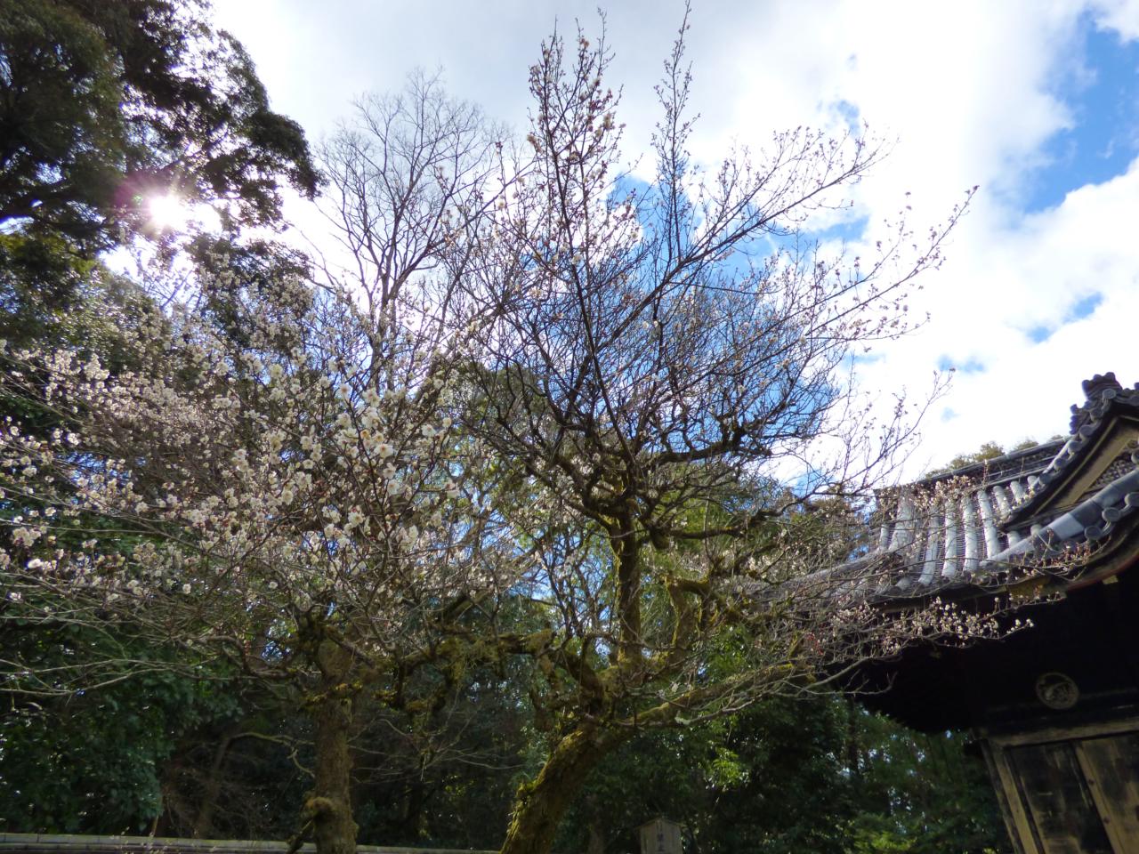 金地院の東照宮と花