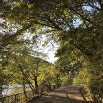 宝ヶ池公園はボートに乗れたり、丘や子供用の遊び場がある公園