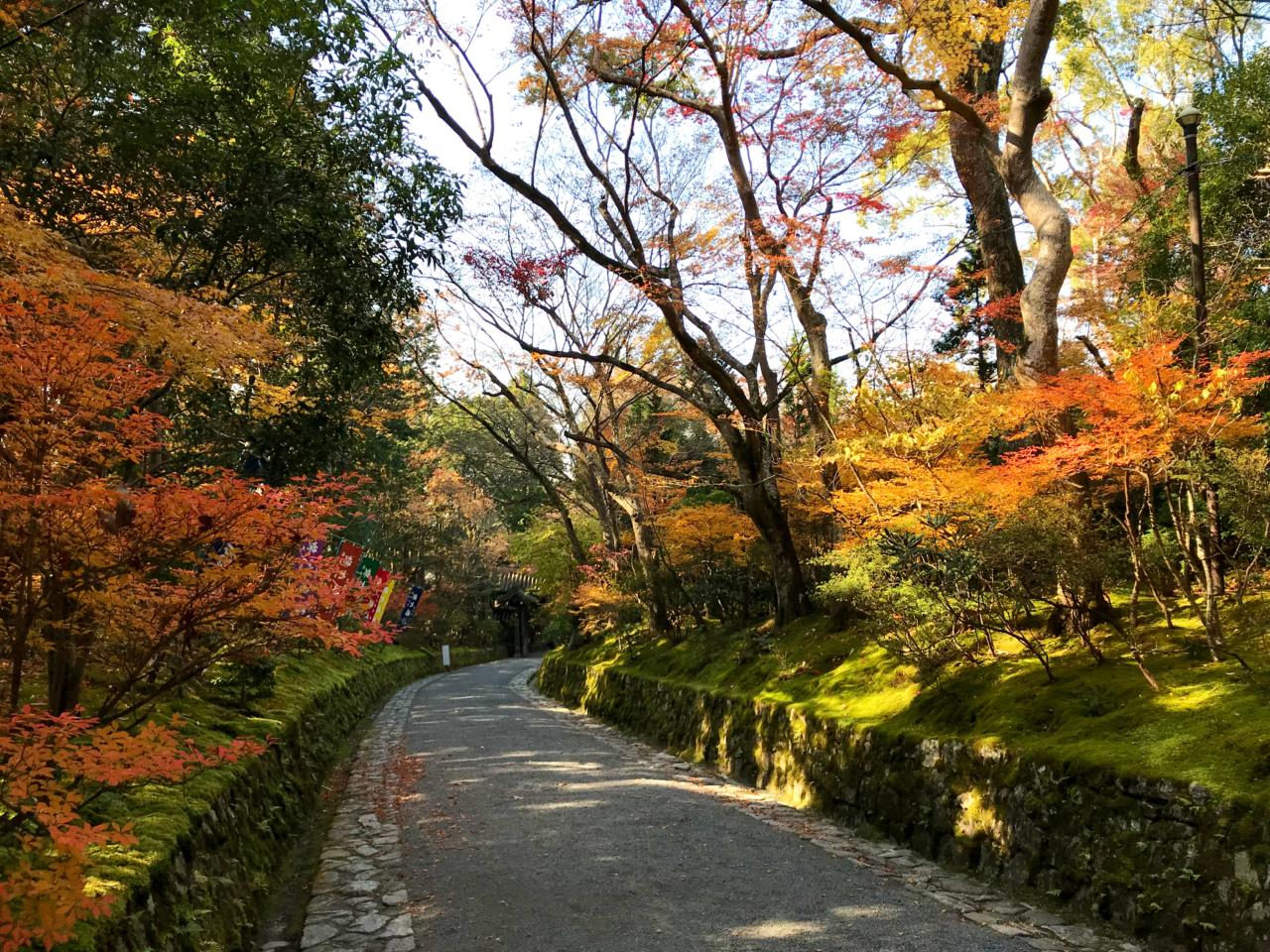 赤山禅院山道の紅葉