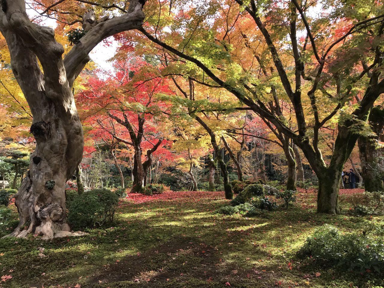 圓光寺の紅葉と苔