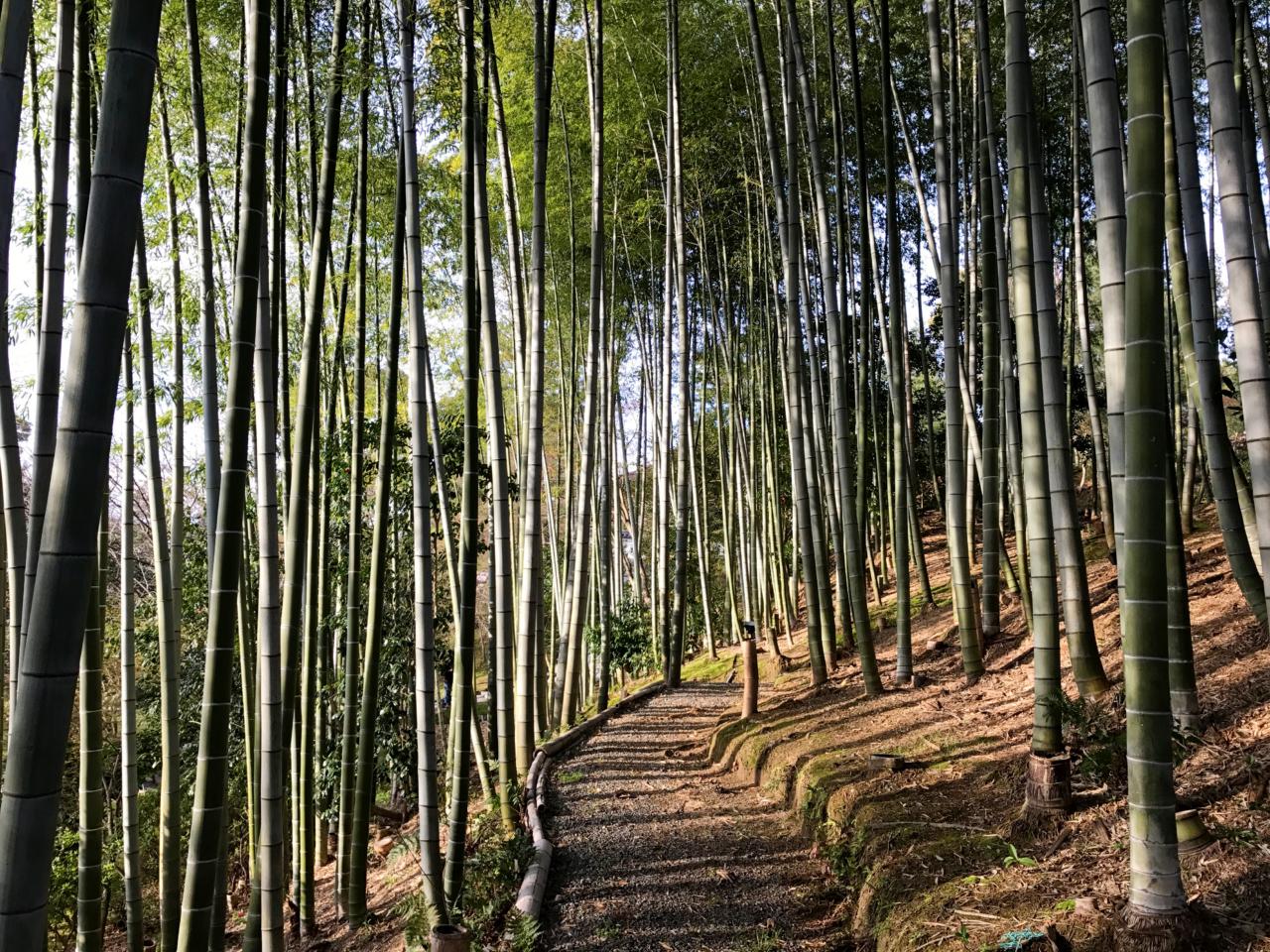 高台寺の竹林の道