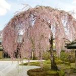 高台寺の見どころを桜・紅葉・ライトアップも含めて解説