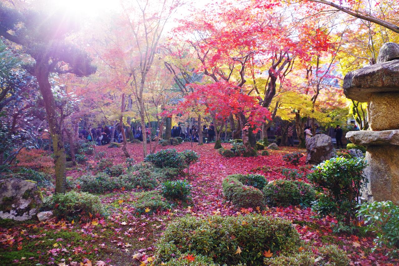 圓光寺の紅葉と陽射しと落ち葉