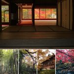 京都・天授庵の庭園を青紅葉・紅葉・ライトアップの写真で解説