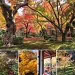 京都の紅葉スポット24選(おすすめ&穴場一覧)
