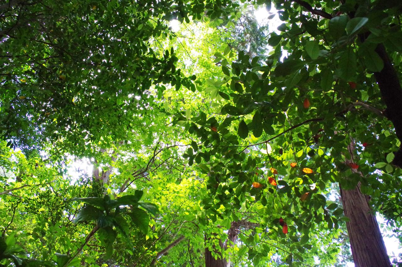 金福寺の森
