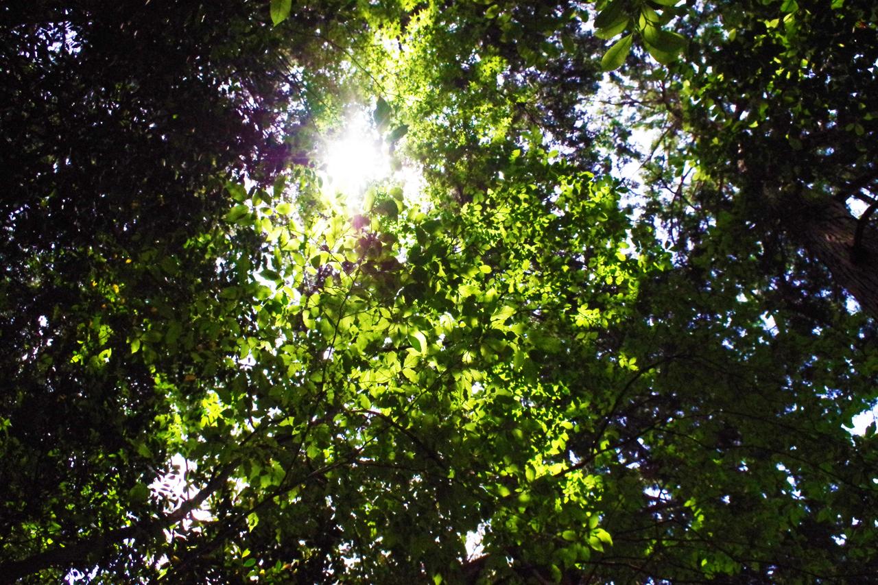 金福寺の葉と光の風景