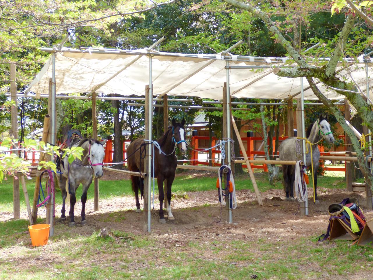 上賀茂神社の馬
