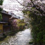 祇園白川の桜と周辺スポットを解説