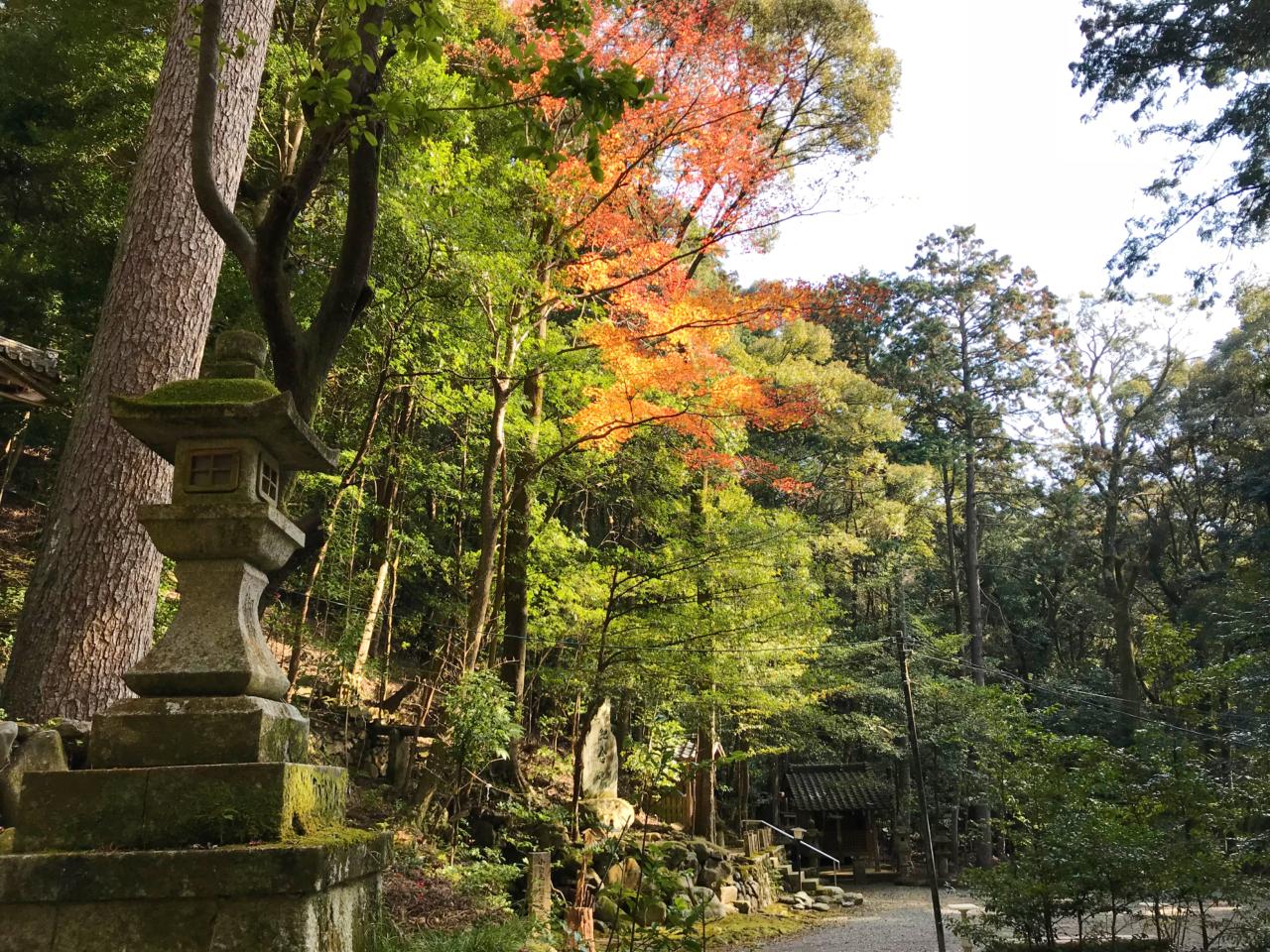 崇道神社の境内の紅葉