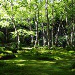 祇王寺の歴史や見どころ、苔を写真で解説