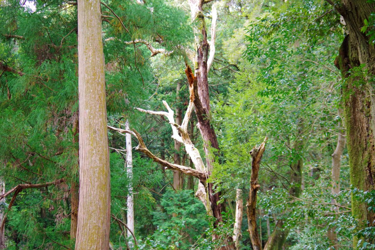 崇道神社の木々