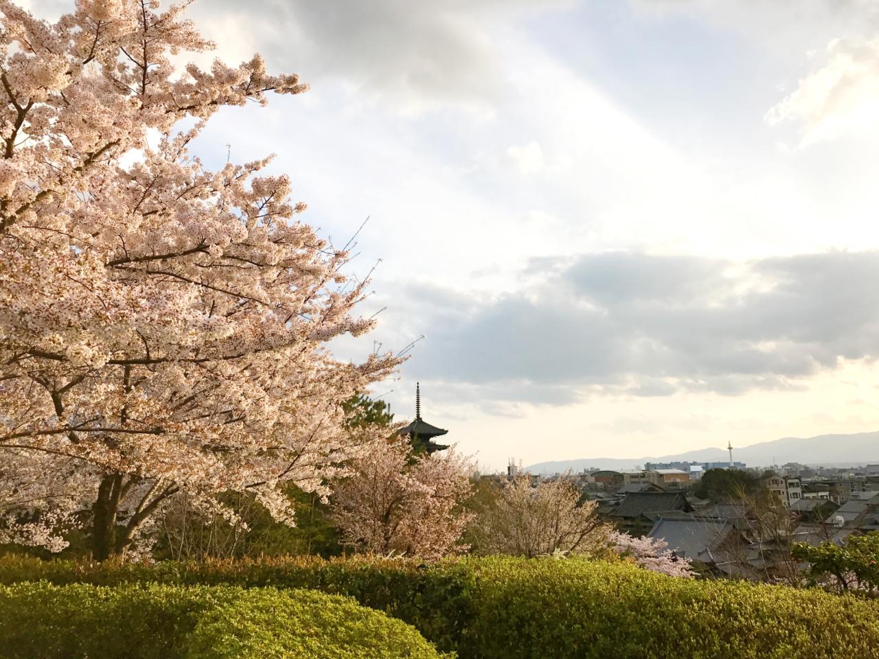 高台寺前の桜