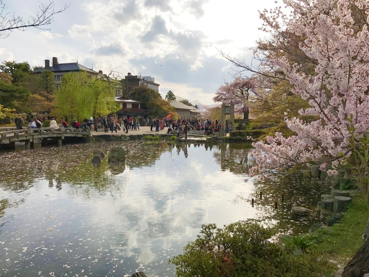 円山公園の桜と池