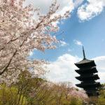 ピンクの景色が美しい京都・桜の名所と穴場16選