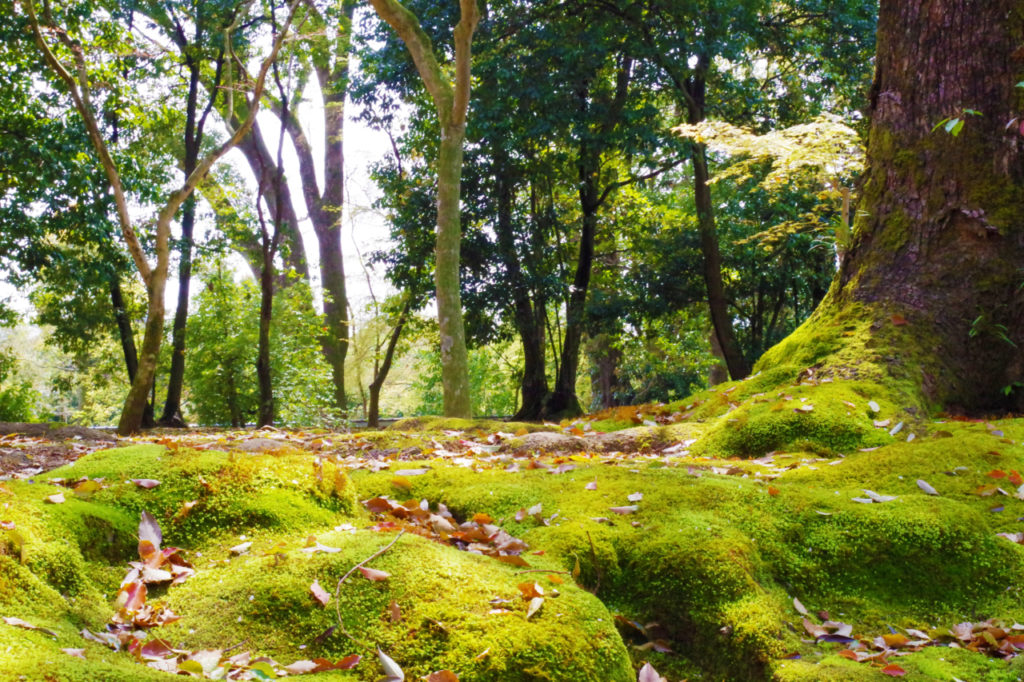 金閣寺参道付近の苔