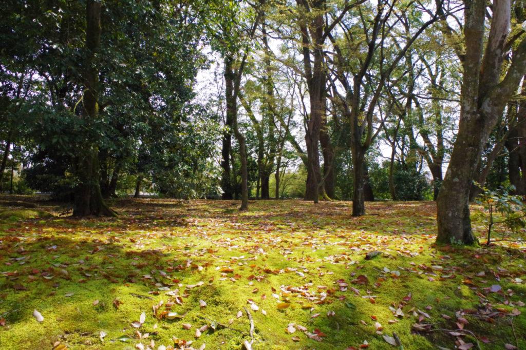 金閣寺の林