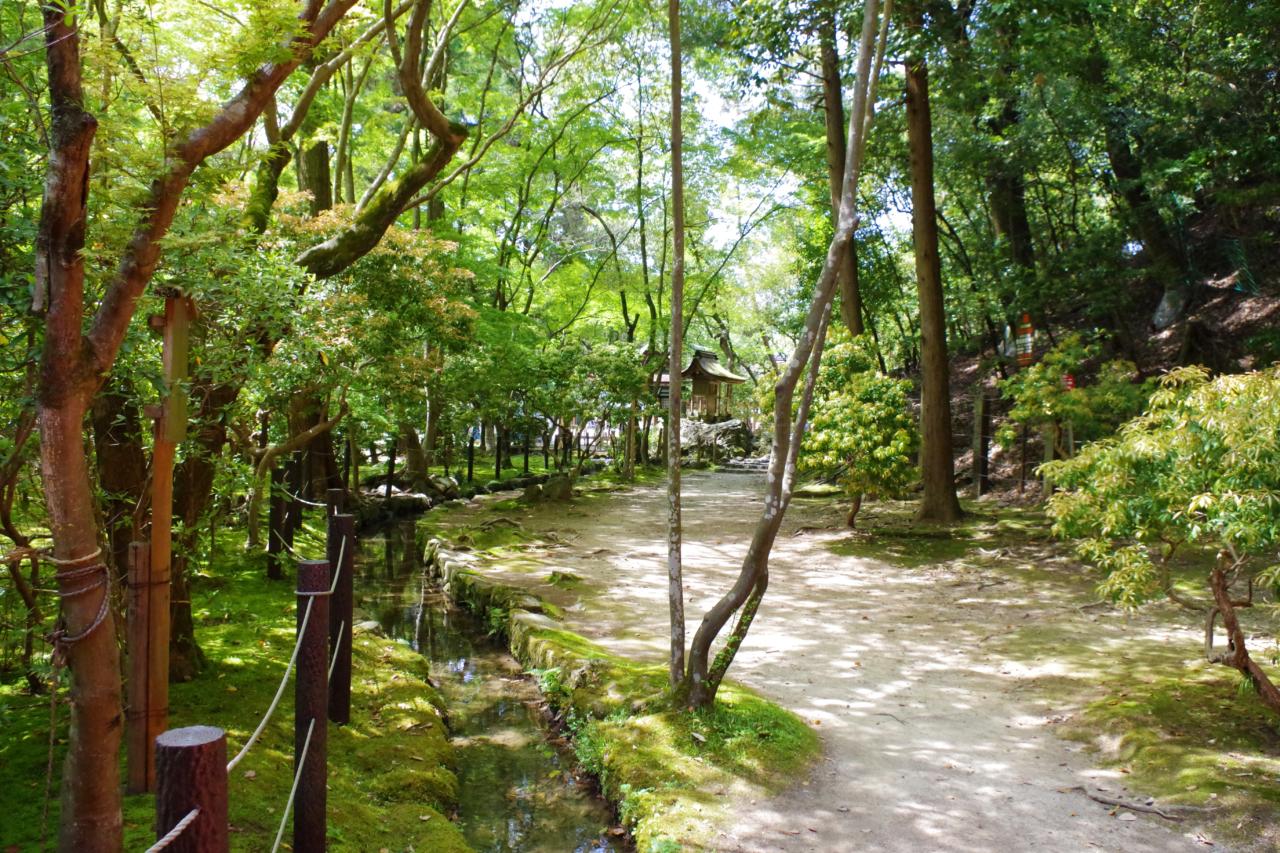 上賀茂神社の苔
