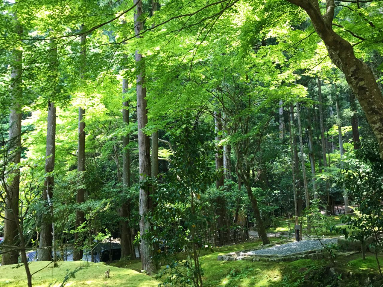 寂光院の苔