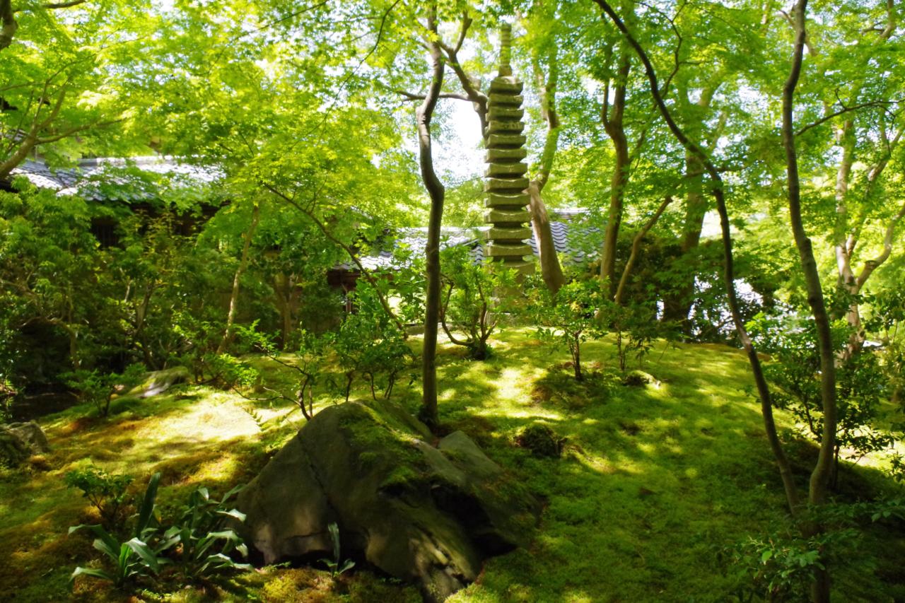 瑠璃光院の苔