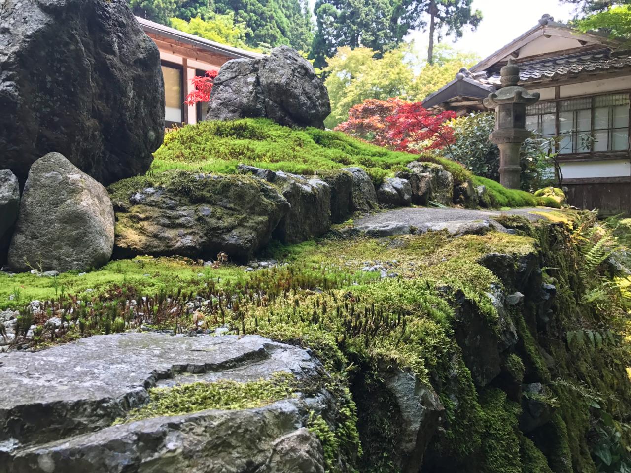 古知谷阿弥陀寺の苔