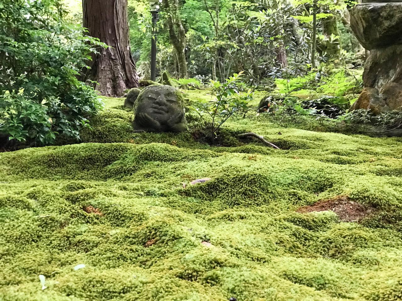 三千院の苔