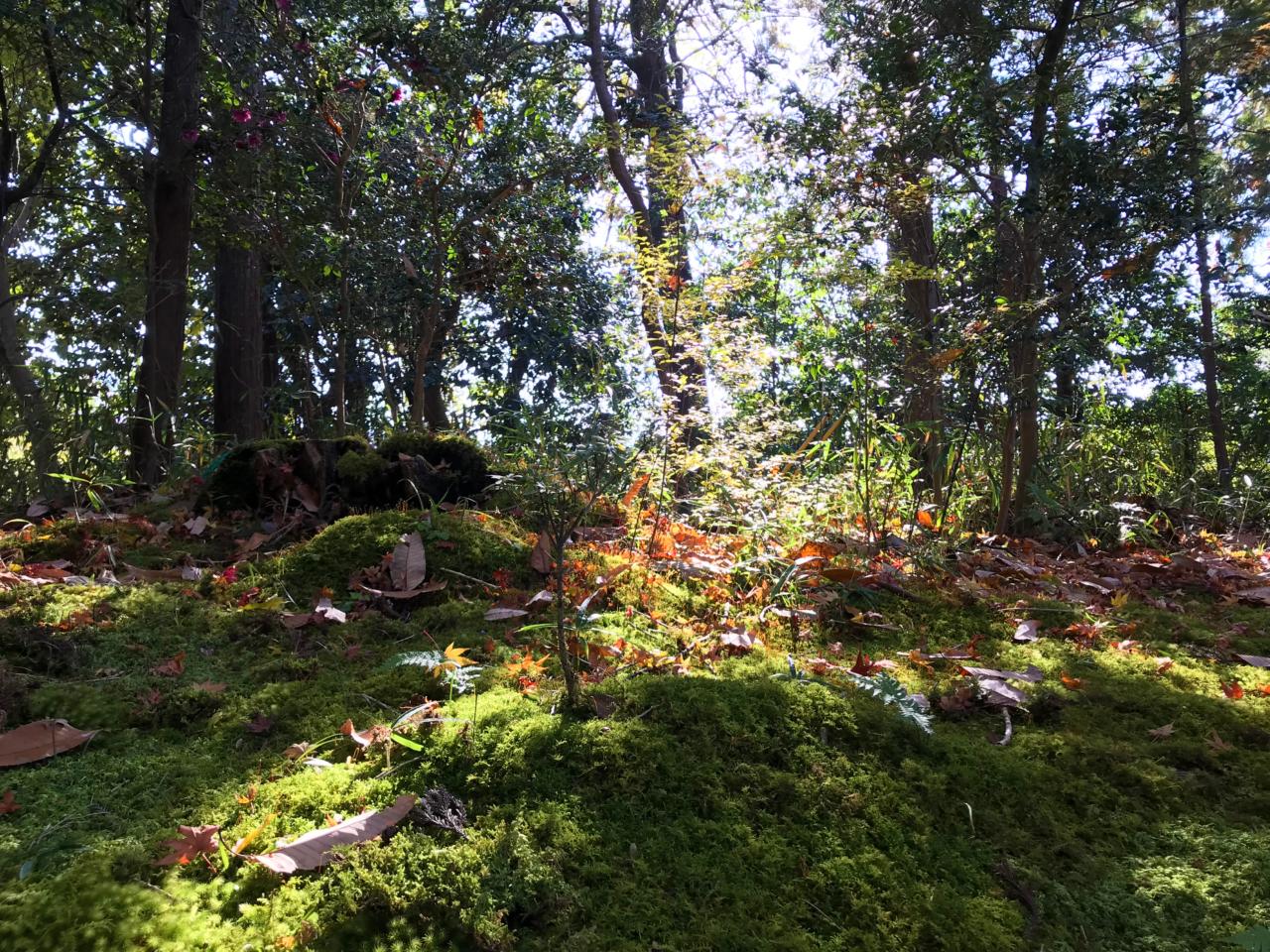 赤山禅院の苔