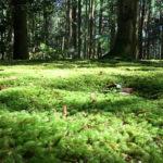 緑の世界が広がる京都の苔めぐり、穴場と名所15選