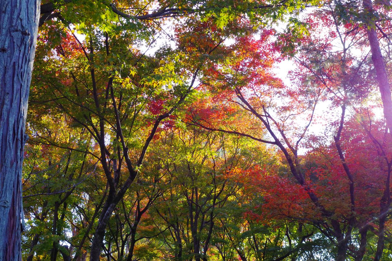 東福寺の木々の紅葉