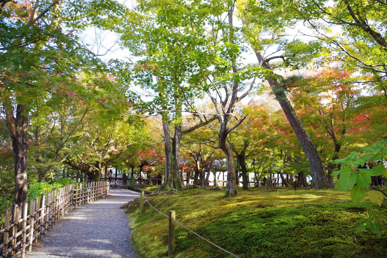 東福寺の紅葉と有料の庭