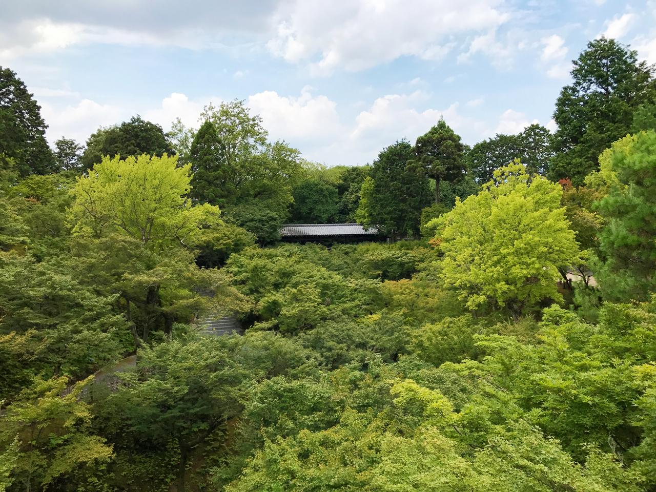 東福寺の通天橋から臥雲橋の緑の風景